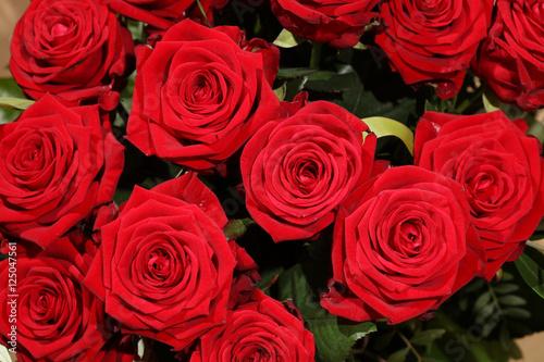 rote rosen stockfotos und lizenzfreie bilder auf bild 125047561. Black Bedroom Furniture Sets. Home Design Ideas