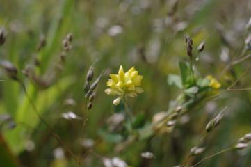 Flower UK