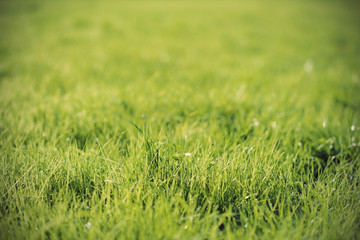 green background by fresh grass, shallow depth of field, vintage filtered style