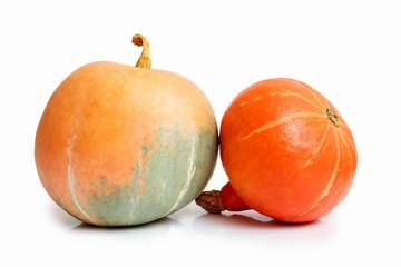 two orange pumpkins on white background