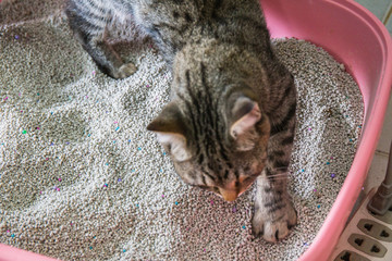 toilet cat Cleaning sand cat  in a litter box