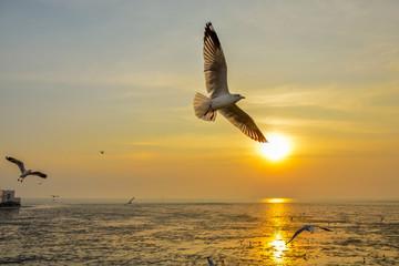 Seagull bangpoo