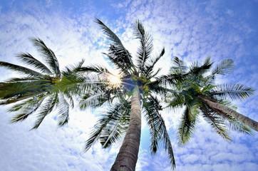 treetop coconut
