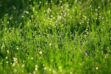 trawa w deszczu