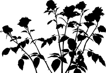 seven black roses bunch silhouette isolated on white