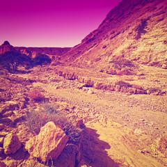 Evening in Desert