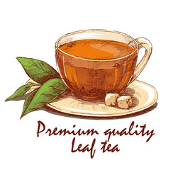 Colored hand drawn cup of leaf tea. Cup of tea, tea leafs and loaf-sugar on saucer. Hand drawn graphic illustration isolated on white background. Vector