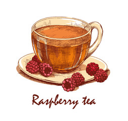 Colored hand drawn cup of raspberry tea. Clear cup of tea and raspberries on saucer. Hand drawn graphic illustration isolated on white background. Vector