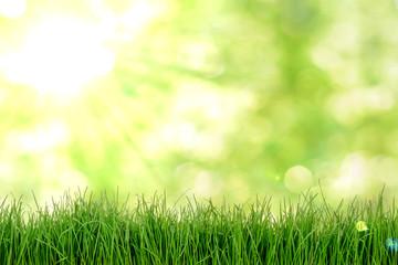 Gras Wiese mit Bokeh