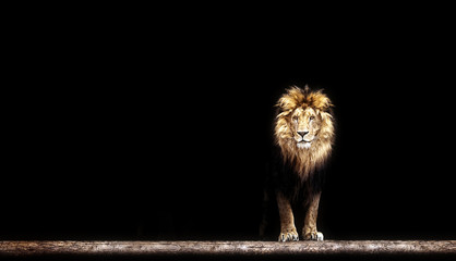 Spoed Foto op Canvas Leeuw Portrait of a Beautiful lion, lion in the dark