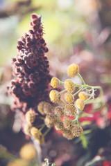 Autumn flower in arrangement