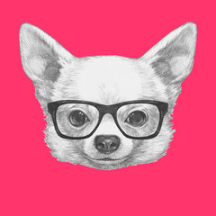 Portrait of Chihuahua with glasses. Hand drawn illustration.
