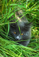 hunter in the grass