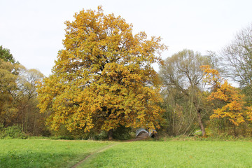 Wall Mural - autumn landscape with old yellow oak tree, some other ones and small bridge