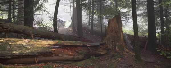 Baumstumpf Im Wald, Wildnispfad, Nationalpark Schwarzwald,  Baden Württemberg, Deutschland, Europa