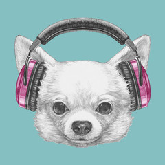 Portrait of Chihuahua with headphones. Hand drawn illustration.