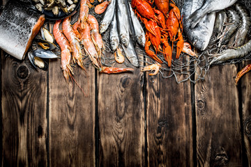 Fototapete - variety of seafood on a fishing net.