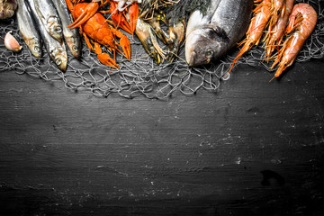 Fototapete - Various marine shrimp, shellfish and lobsters at the fishing net.