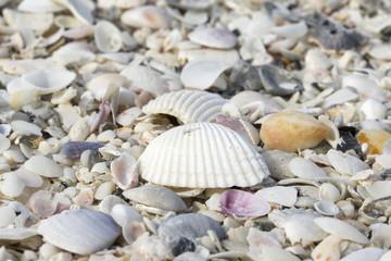 Seashells along sandy beach in Florida