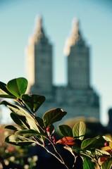 Central Park in the autumn, Manhattan, New York, USA.