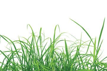 Green grass vector illustration eps 10.