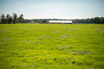 Cow-house in wide dutch landscape during summer. Winterswijk. Achterhoek.