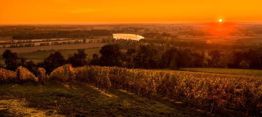 Vineyard Sunrise, Bordeaux, Saint Emilion, France