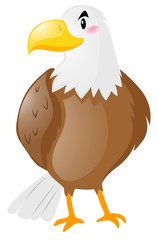 Wild eagle on white background