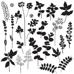Floral elements and berries silhouette