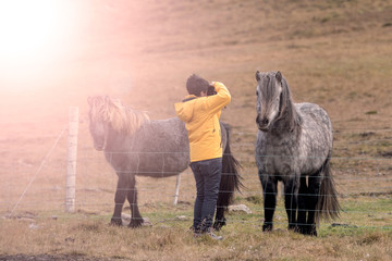 Asian short hair lady take photo of horses between fence with le