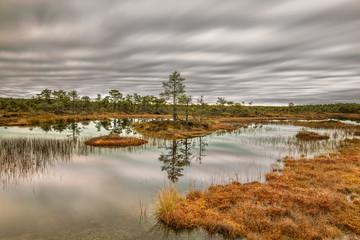 Cloudy autumn bog