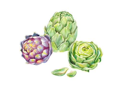 green and pupler artichokes, and half green artichoke, watercolor on white background