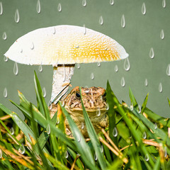 Frog sitting under large mushroom while it is raining.  Mixed media image.  Graphic Waterdrops.