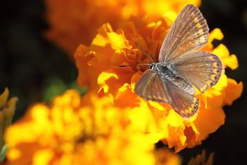Moth on a Sunny flower
