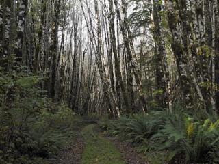 Abandoned Logging Road