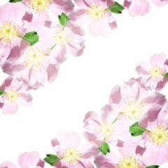Beautiful floral pattern of pink dogrose