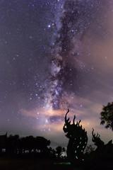 Amazing bright star milky way night sky and kink of Naga Wat Sirindhorn temple in Northeast  Thailand .