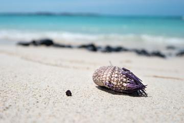 wild life on white beach in mauritius