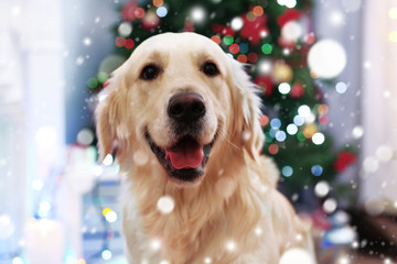 Cute dog on blurred Christmas tree background. Snowy effect, Christmas celebration concept.