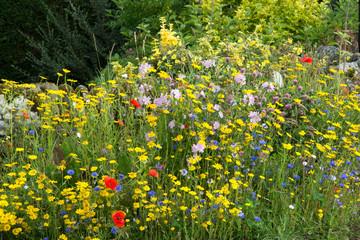 The Wildflower Corner