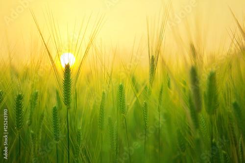 Восход на фоне одуванчиков скачать