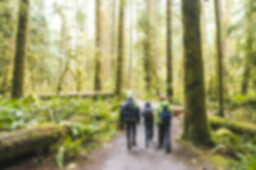 blurred,people hiking in plenty forest in Olympic national park area,Washington,usa.  -blurred technique.
