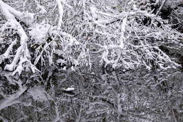Snow covered branches reflected in the river.