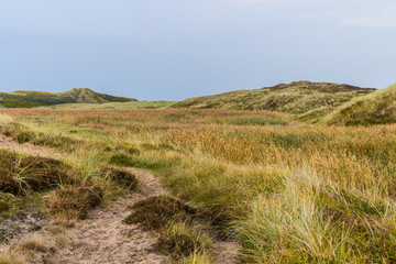 Dunes of Denmark with Reed