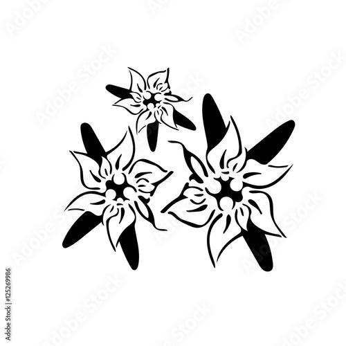 """Favoloso stella alpina stilizzata"""" Immagini e vettoriali Royalty Free su  LJ14"""