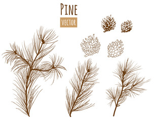 Collection of pine branches and cones on white background, engraved style, vector