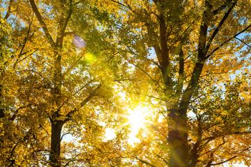 Spaziergang im herbslichen Wald mit Sonnenschein