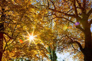 Herbst im Wald  mit strahlender  Sonne