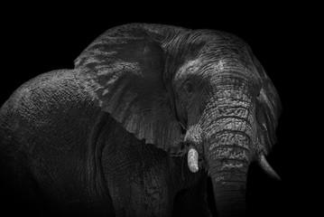 Elephant of Rwanda
