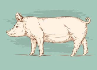 Vector illustration of a pig